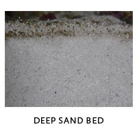 Deep Sand Bed