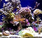 Saltwater Aquarium Filtration