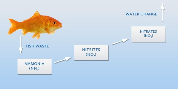 Aquarium nitrogen cycle aquarium filter guide for How to cycle a fish tank