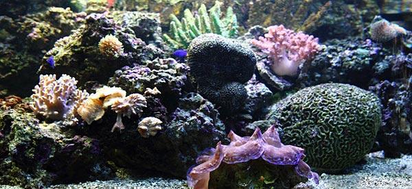Reef Aquarium with Live Rock