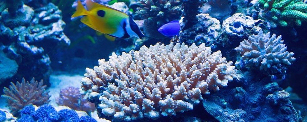 Aquarium Filter Guide